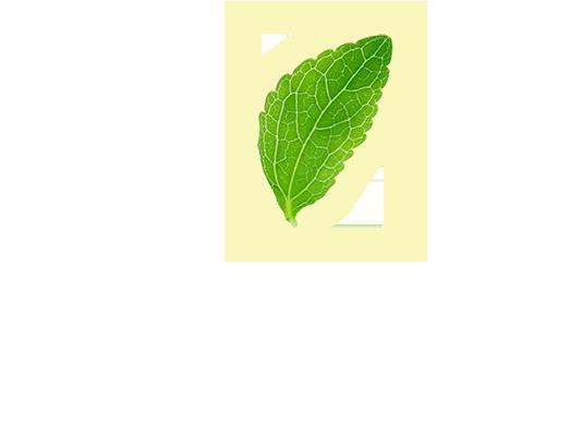 stevia felső levél